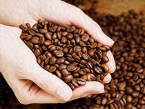 カフェ・ラ・タオの珈琲は 「生豆の仕入れ」「焙煎」「ブレンド」にこだわっています!
