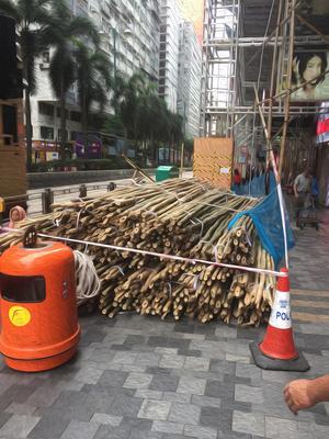 香港竹.jpg